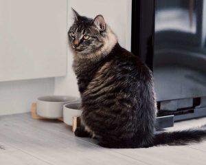 Quanto deve mangiare il gatto