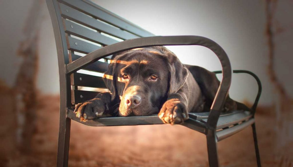 Cane sulla panchina
