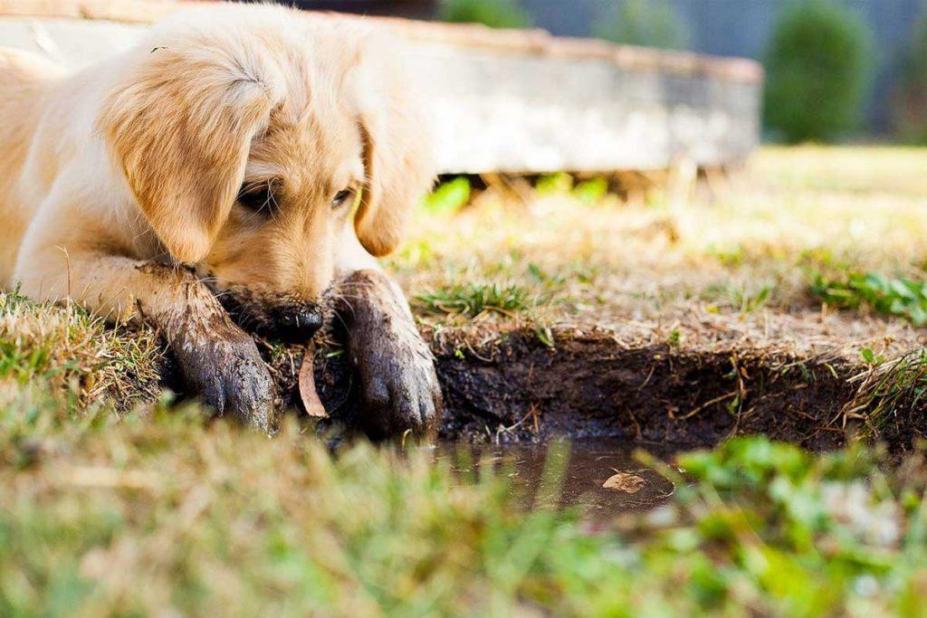 Cucciolo di cane antiparassitario