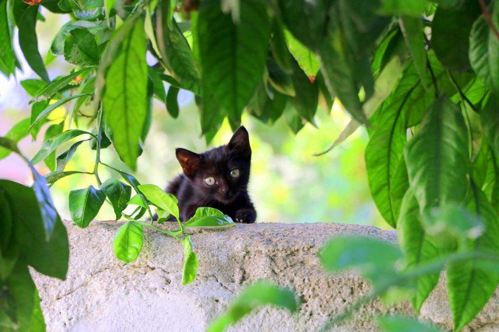 Gattino in mezzo ai rami